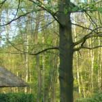 Profilbild von Trullalinchen
