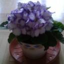 Profilbild von orchidee68