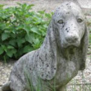 Profilbild von Waldi