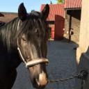 Profilbild von shadow185