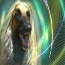 Profilbild von Femere