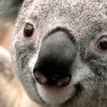 Profilbild von kiki