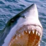 Profilbild von Juniper